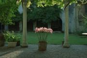 Фото 12 Амариллис: цветущая роскошь на вашем подоконнике