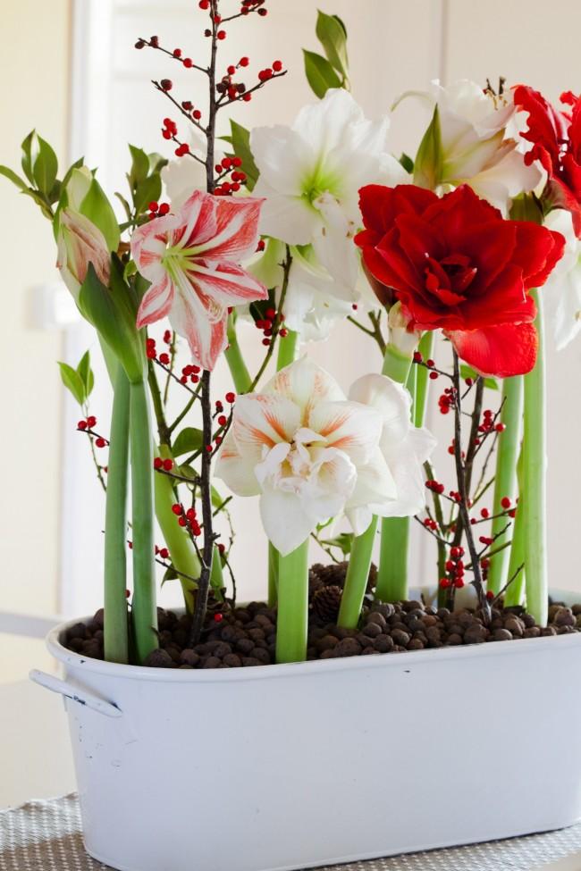 Для того чтобы цветок зацвел в следующем году после окончания цветения , цветоносы следует сразу удалять