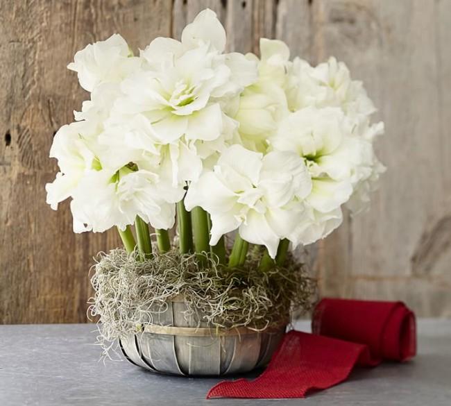 Шикарный вазон с пушистыми цветами белой окраски