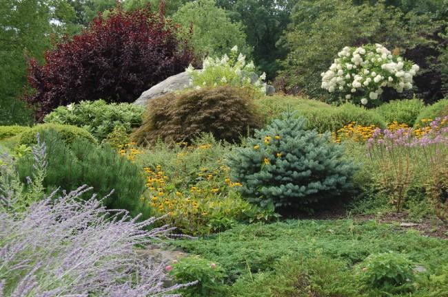 Карликовые ели в сочетании с яркими цветами будут красиво смотреться у вас на участке