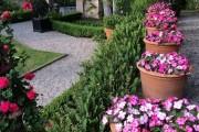 Фото 15 55 фото бальзамина: уход в саду и в домашних условиях
