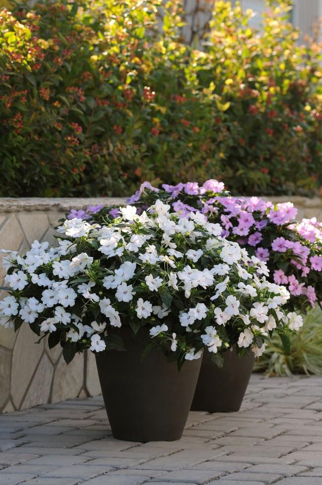 Вазоны с великолепными цветами