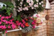 Фото 21 55 фото бальзамина: уход в саду и в домашних условиях