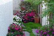 Фото 30 55 фото бальзамина: уход в саду и в домашних условиях
