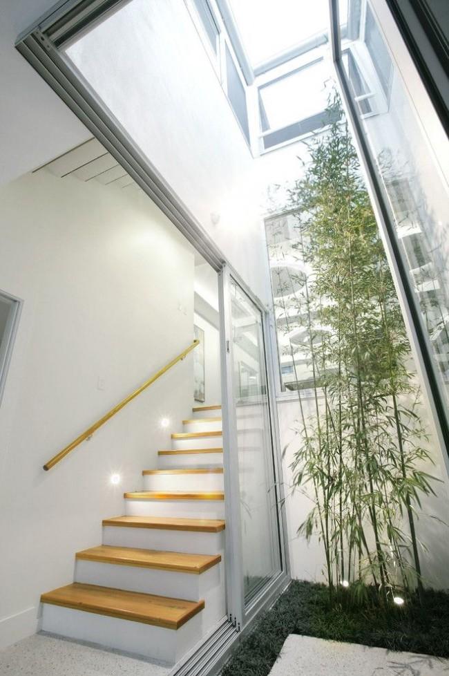 Если позволяет высота потолков в помещении, то можно посадить древовидный бамбук