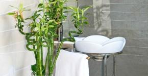 Комнатное растение бамбук (48 фото): уход и размножение фото
