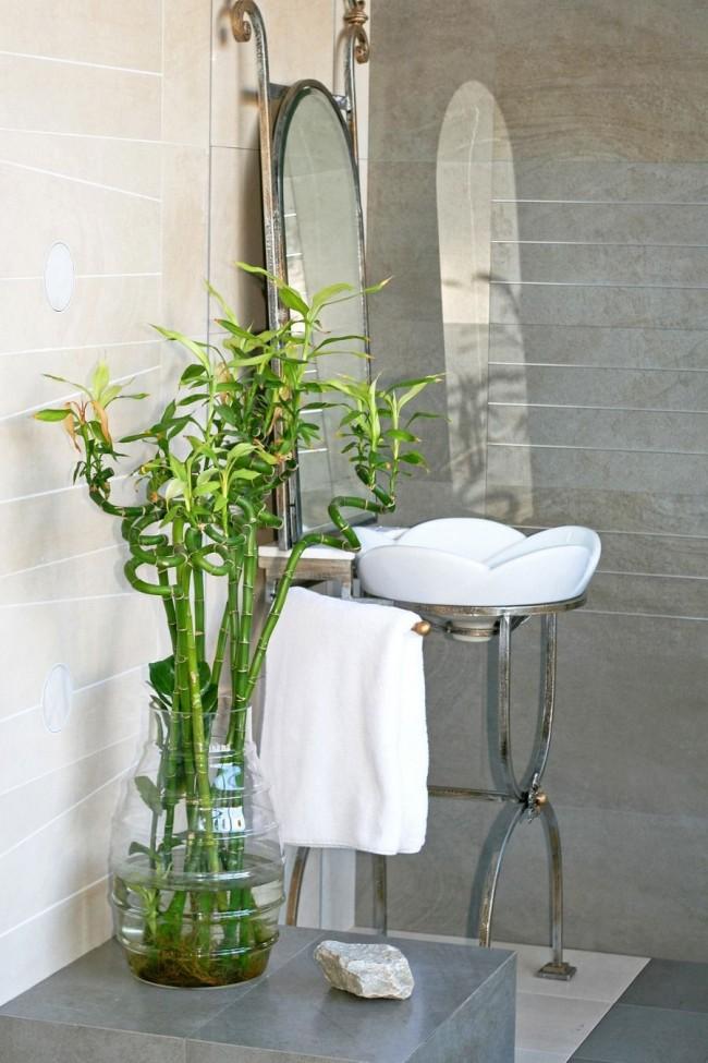 Сегодня комнатный бамбук можно встретить во многих домах
