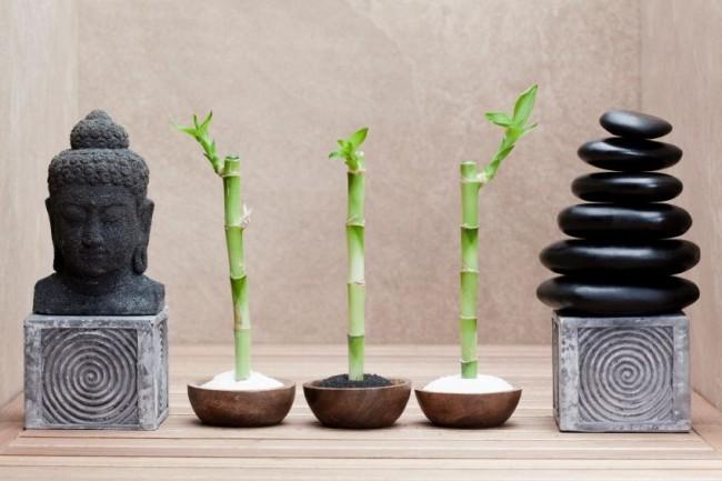 Уход за бамбуком в воде – возможность дать своей фантазии и воображению воплотиться в реальности