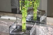 Фото 23 Комнатное растение бамбук (48 фото): уход и размножение