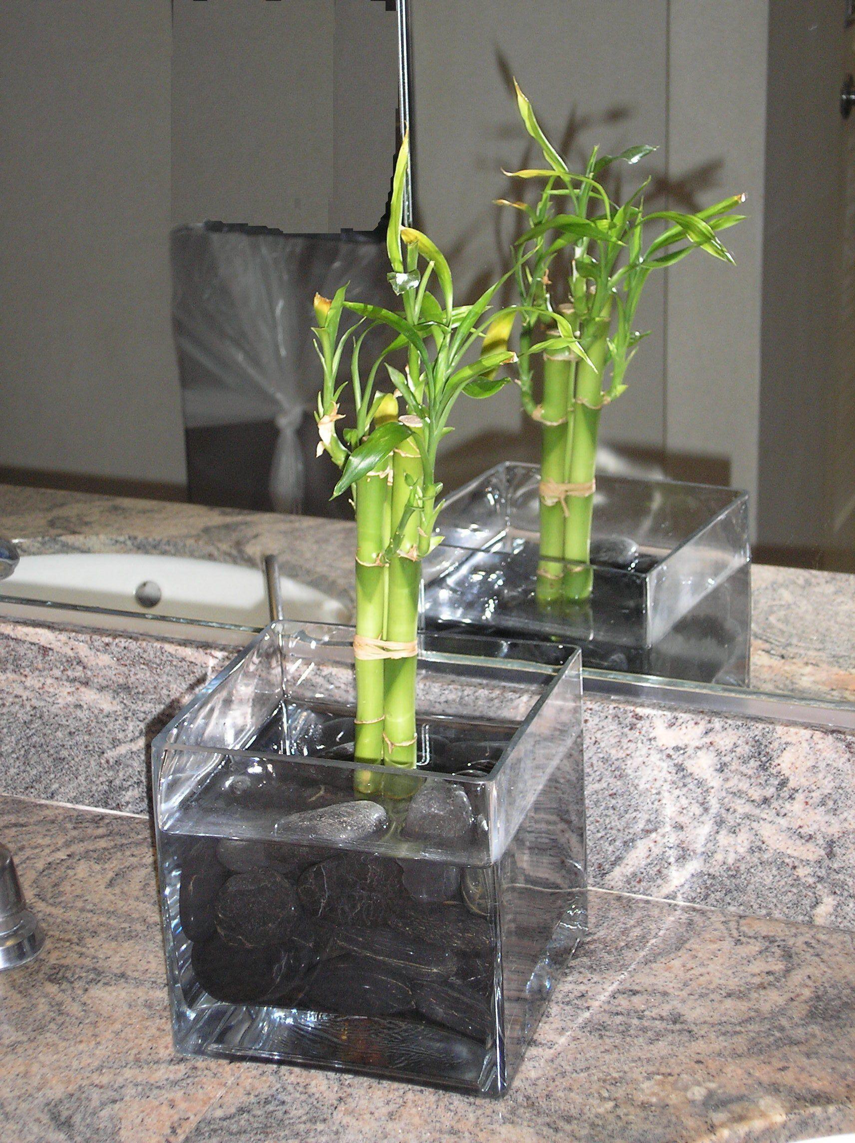 Бамбук в домашних условиях во что сажать
