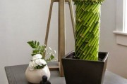 Фото 4 Комнатное растение бамбук (48 фото): уход и размножение