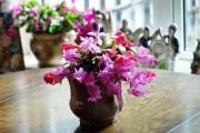 Фото 4 Декабрист (цветок): уход в домашних условиях