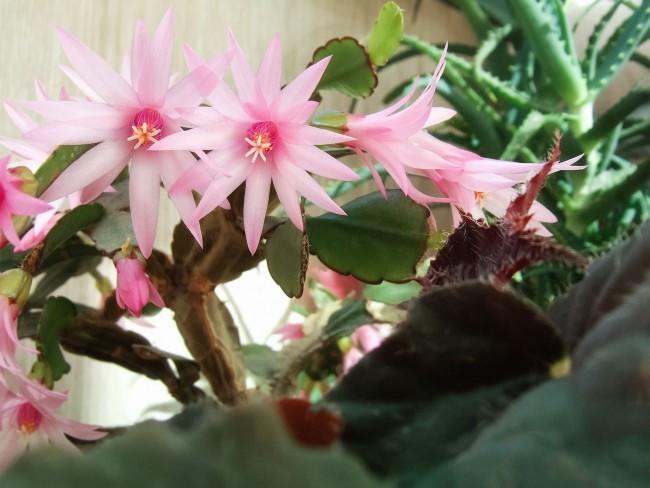 Красивые нежно-розовые цветы