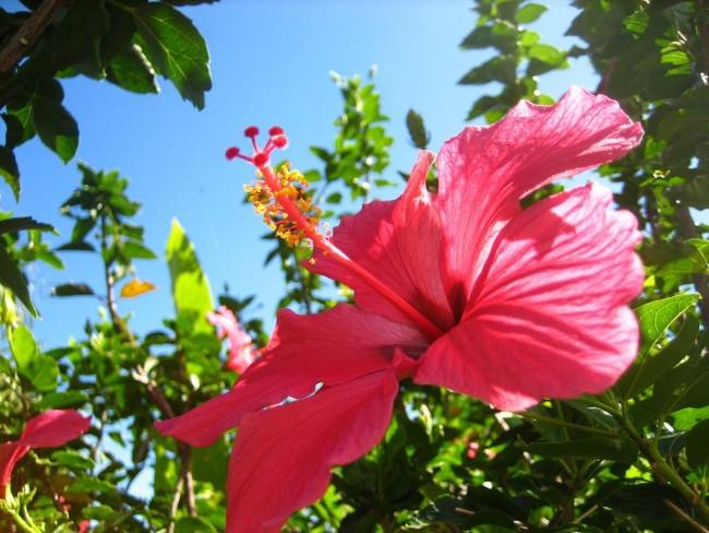 С правильным уходом ваш цветок будет радовать вас длительное время