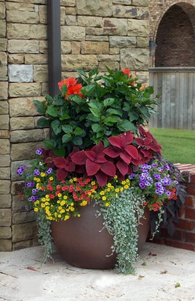 Гибискус прекрасно сочетается с другими цветами