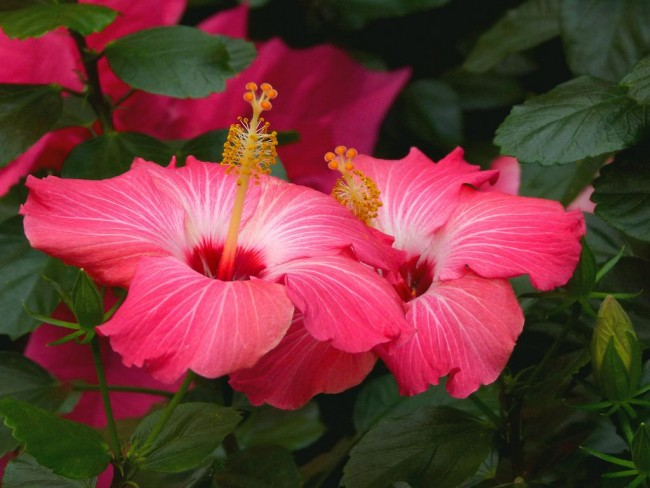 Красивые розовые цветы поднимут настроение и наполнят радостью вас на целый день