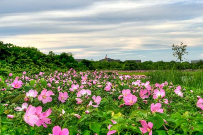 Шикарная цветочный ковер розового цвета
