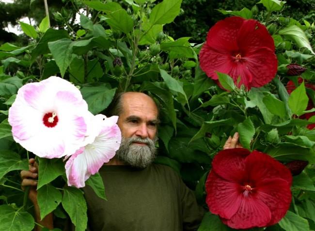 Красивые цветы-великаны