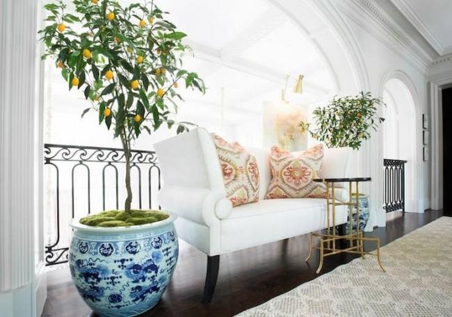 Цитрусовое дерево в интерьере гостиной