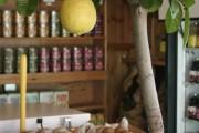 Фото 14 Комнатный лимон: сорта, уход в домашних условиях
