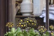Фото 19 Весенние первоцветы (фото с названиями): разбудите ваш дачный участок!