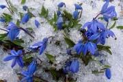 Фото 11 Весенние первоцветы (фото с названиями): разбудите ваш дачный участок!