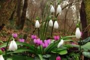 Фото 24 Весенние первоцветы (фото с названиями): разбудите ваш дачный участок!
