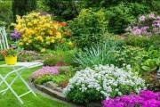 Фото 26 Весенние первоцветы (фото с названиями): разбудите ваш дачный участок!