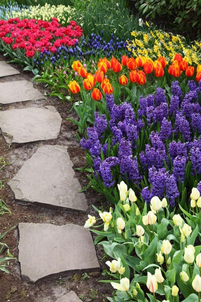 Аллея из ярких весенних цветов
