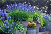Фото 28 Весенние первоцветы (фото с названиями): разбудите ваш дачный участок!