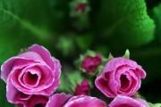 Фото 5 Весенние первоцветы (фото с названиями): разбудите ваш дачный участок!