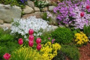 Фото 8 Весенние первоцветы (фото с названиями): разбудите ваш дачный участок!