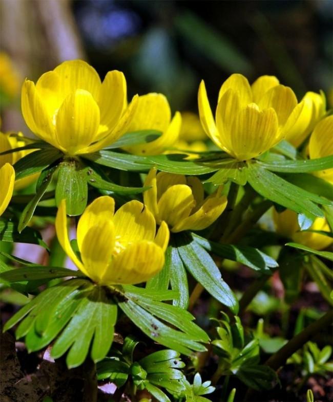 Небольшие желтые цветочки могут украсить ваш сад