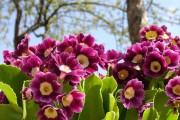 Фото 3 Весенние первоцветы: фото с названиями