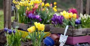 Весенние первоцветы: фото с названиями фото