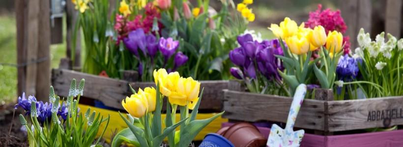 Весенние первоцветы: фото с названиями
