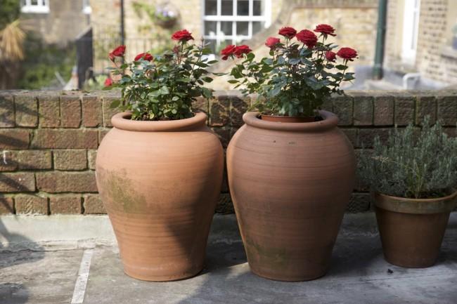 Не рекомендуется проводить подкормки в дождливую или очень холодную погоду, а также удобрение больных или только что пересаженных растений