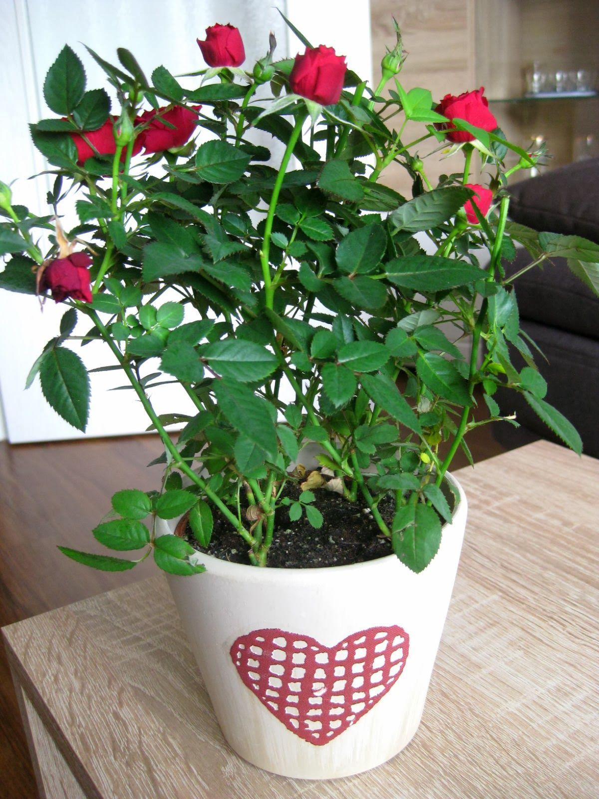 Растение Happy Plant Горшок Мелисса лимонная hpn-4