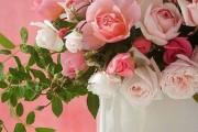 Фото 1 Комнатная роза: уход за капризной красавицей
