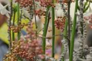 Фото 8 Амазонская лилия (эухарис): как ухаживать правильно