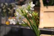 Фото 4 Амазонская лилия (эухарис): как ухаживать правильно