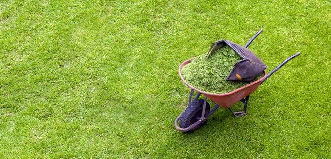 Скошенной травой из травосборника газонокосилки можно тут же мульчироват газон. Это хорошая защита от сорняков и некоторый удобряющий эффект
