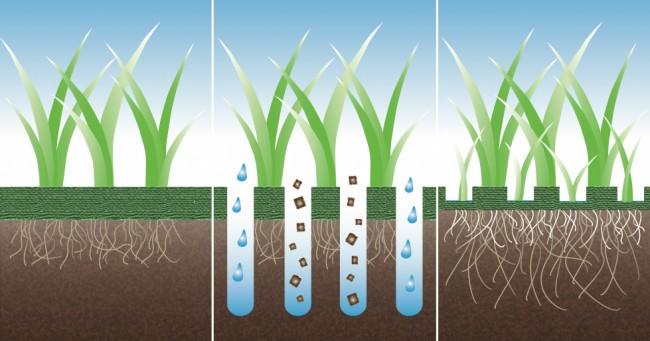 Необходимая для газона процедура - аэрация. Получая больше воздуха, воды и удобрений, корневая система травы становится крепче