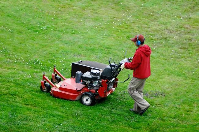 Хорошо укоренившуюся и окрепшую траву следует не лениться часто стричь. Это обеспечит ей хорошую корневую систему