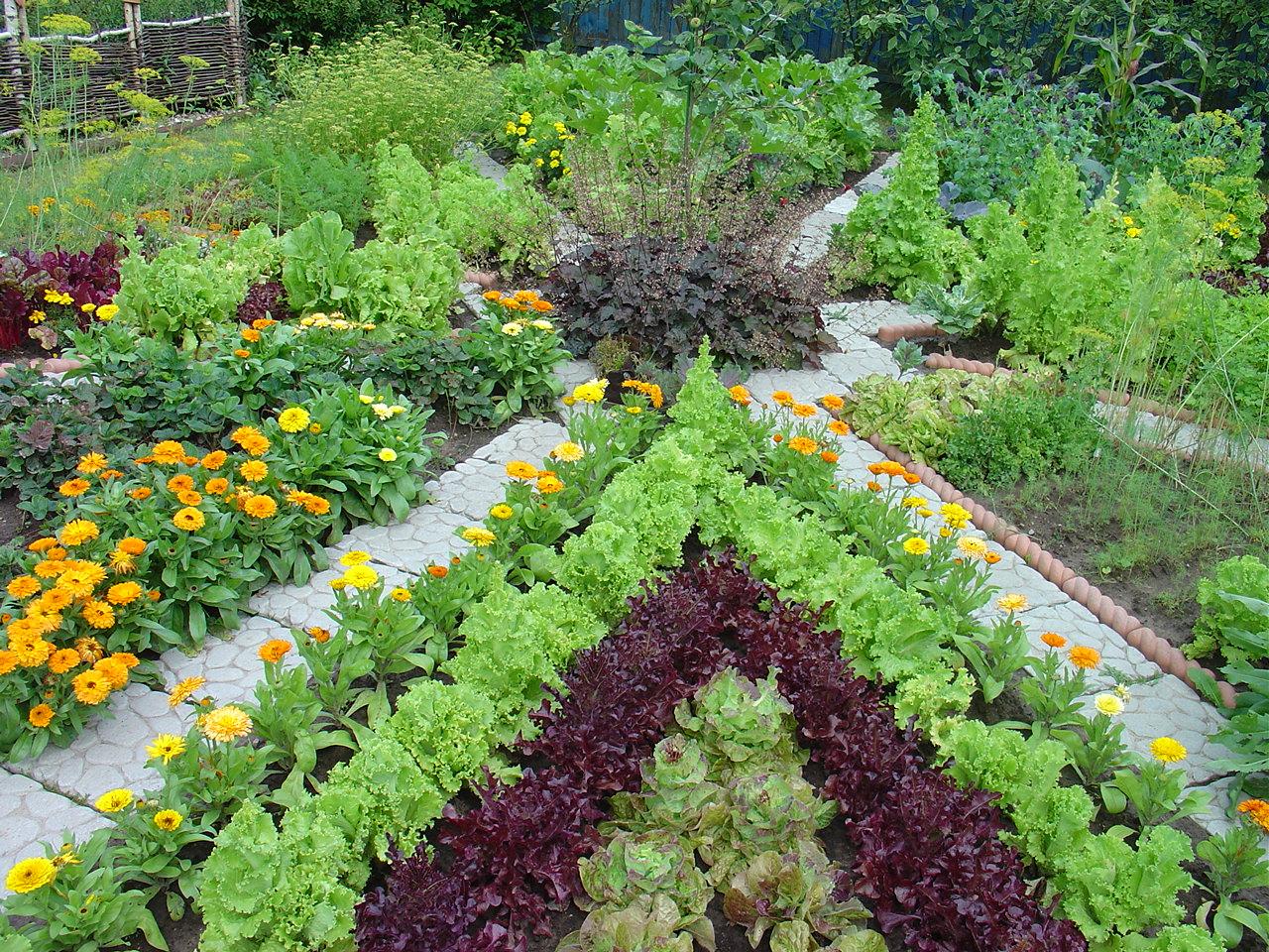 Выращивания садовых культур в