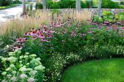 Фото 11 Рудбекия — «золотой шар» в вашем саду (50+ фото видов): советы по посадке и уходу от опытных садоводов