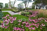 Фото 20 Рудбекия — «золотой шар» в вашем саду (50+ фото видов): советы по посадке и уходу от опытных садоводов
