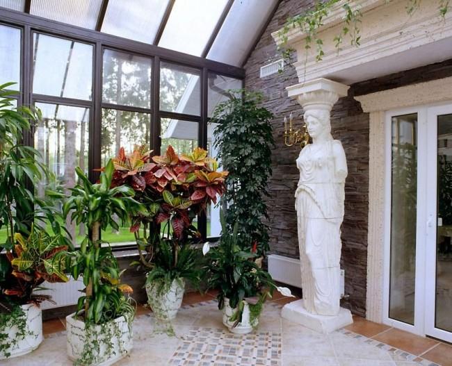 Зимний сад украсит пустрое дерево кротона