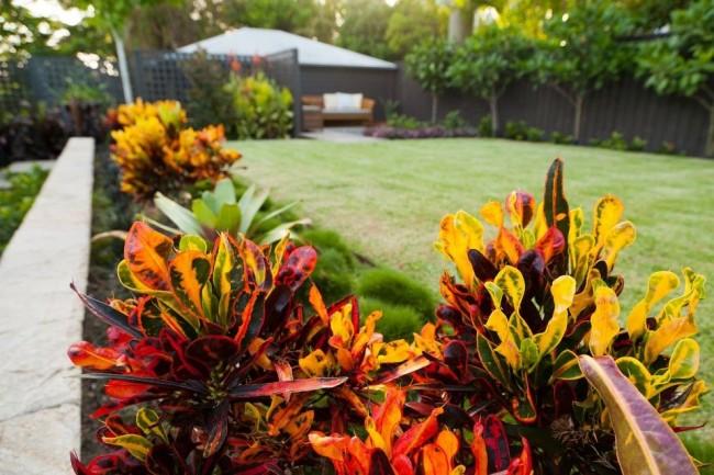 Очарование красок в домашнем саду