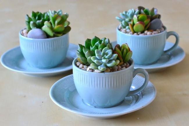 Суккуленты, растущие в чайных чашках - яркое и необычное украшение для кухни
